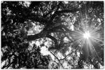 Tree Tops WaterMark