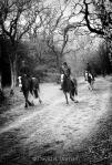 BW_Horses_WM